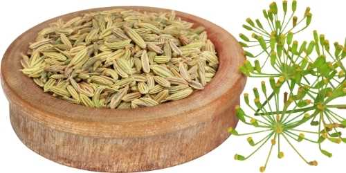 fennel seeds to increase breast milk