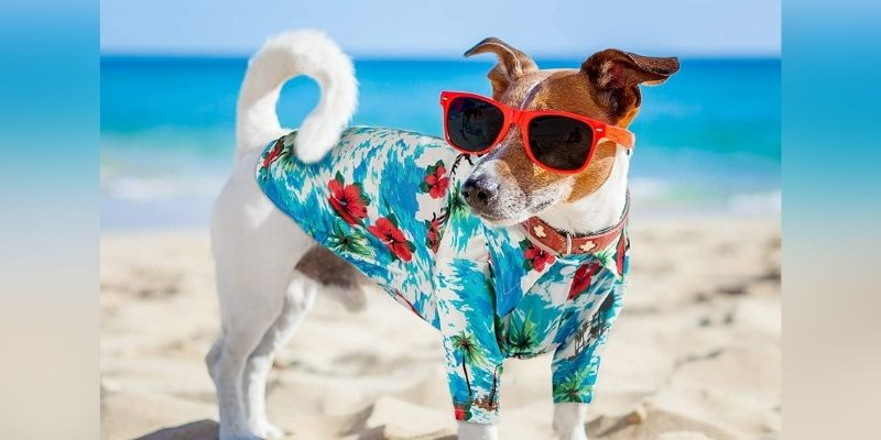 dog funky shirt outfit