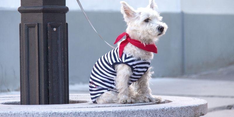 dog wearing stripe dress and red bandana