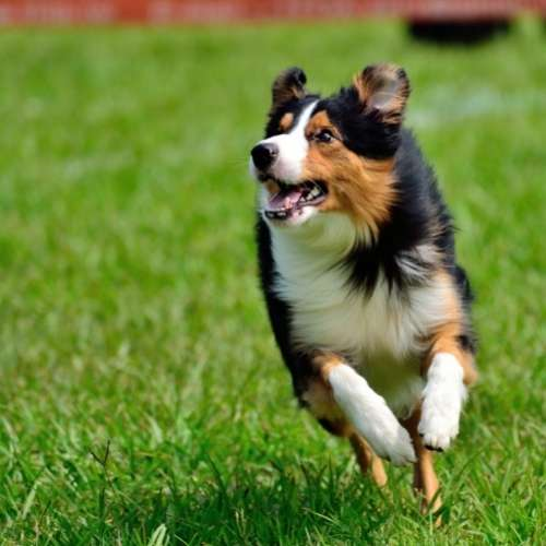 healthy dog food for an energetic dog