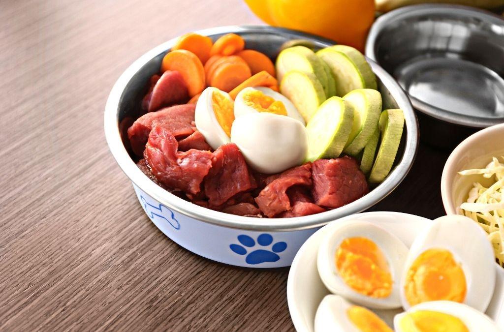 Benefits of Feeding Your Pooch Healthy Dog Food?