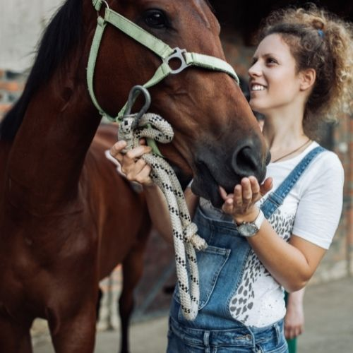 choosing your horse for horse riding